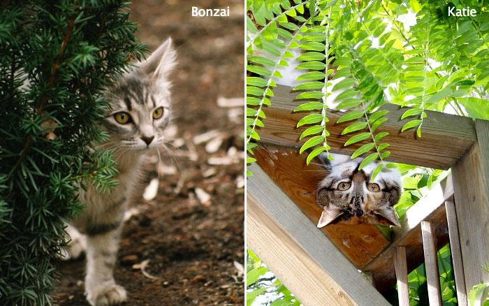 bonzai+katie